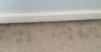 Signs Of Mold On Your Carpet